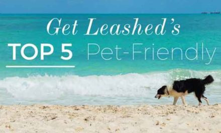 Pet friendly resorts in the Caribbean